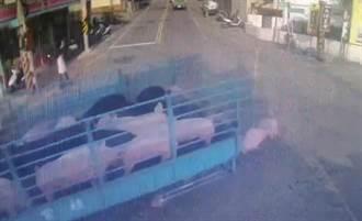 豬隻運送車走了卻留下豬 離奇畫面引發熱議
