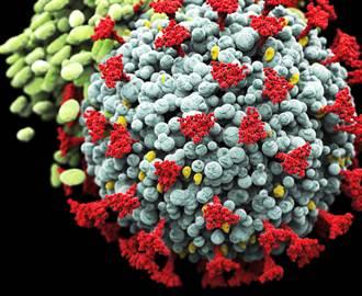 抗體防不了南非變種病毒 研究:新冠痊癒者再度感染