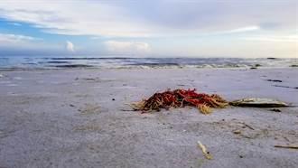 海灘上見黃色塑膠繩垃圾 女湊近看嚇傻:居然是活的