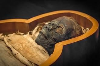 世界唯一泥土木乃伊 3400年前罕見作法藏悲哀真相