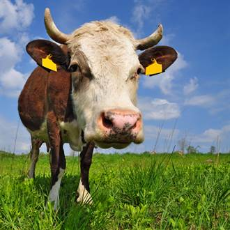 【新聞多益】等到天荒地老的英文是?跟著農曆牛年學英文
