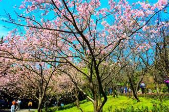 走進陽明山的花花世界 春天上山賞花囉