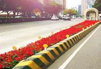 中市道路分隔島、公園花團錦簇喜迎農曆春節