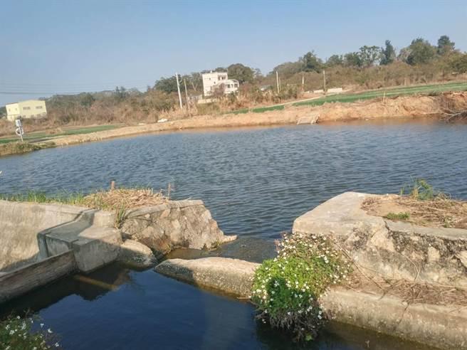 金門農塘結合自來水廠放流水,讓珍貴水資源獲得更有效的利用。(縣府建設處提供)