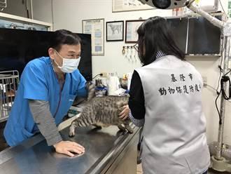 年節基隆寵物醫院多休店 初三僅2間復業