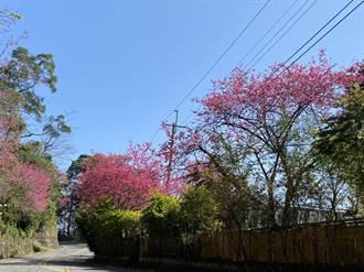 春節連續假期走春 快來新竹縣遊玩