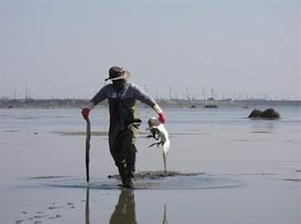 黑面琵鷺疑肉毒桿菌毒素中毒 布袋鹽田6天內7死2傷