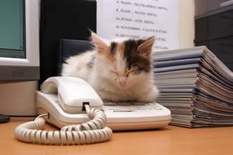毛孩讀心術》男飼主對小貓提不合理要求 寵物溝通師一眼突破盲點