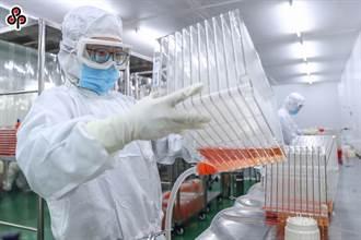 國際疫苗分配解析 韓國廠牛津AZ疫苗分台灣