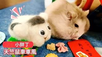 國民黨青年部拚動保拍寵物賀歲片  毛小孩向大家拜年