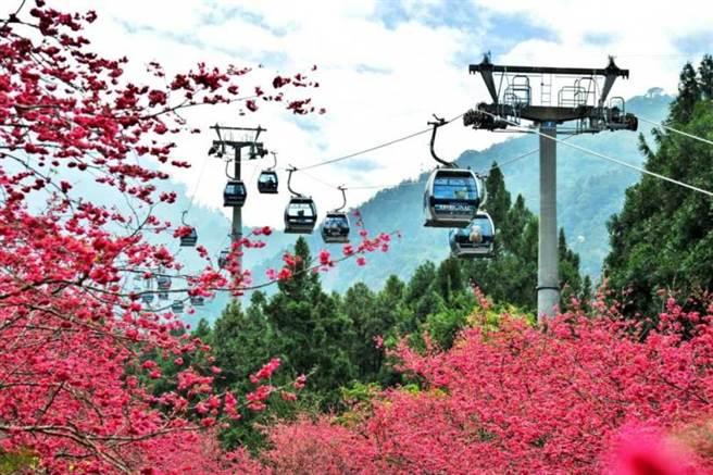 九族文化村為日本櫻花協會授證為日本海外「櫻花名所優選之地」。(圖/雄獅旅遊)