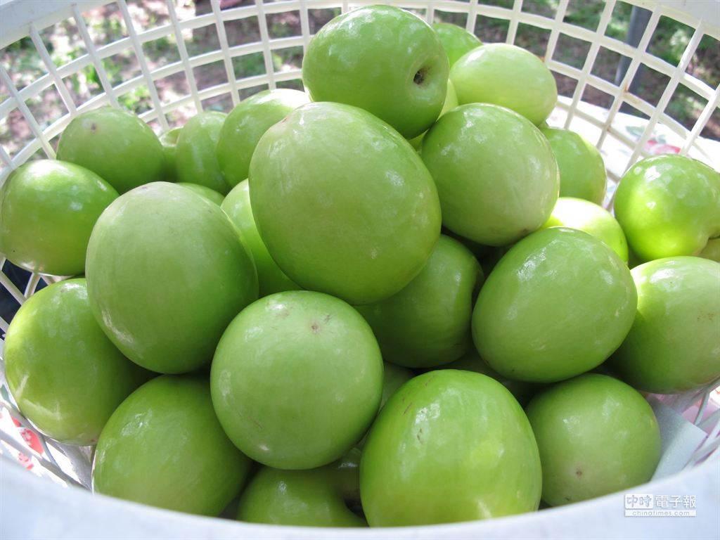 維生素C比檸檬高,抗氧化又助順暢,有「台灣青蘋果」暱稱的蜜棗,專家傳授挑選和切盤秘訣。(圖/本報系資料照片 柯宗緯攝)