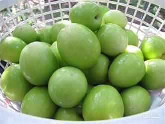 維生素C比檸檬高 抗氧化又助順暢 蜜棗這樣挑保證甜