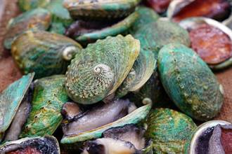龍蝦被禁澳洲盼鮑魚緩和海鮮業者壓力 殘酷現實曝光