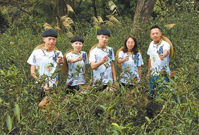 谷芳有機茶園遵循古法,以人工採栽剛長出來7至10天的細芽嫩心,不採收多餘的枝梗,這就是谷芳對品質的堅持。