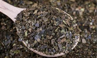 「亞馬遜苦丁茶」抗氧化效果是綠茶2倍 但3族群避免飲用