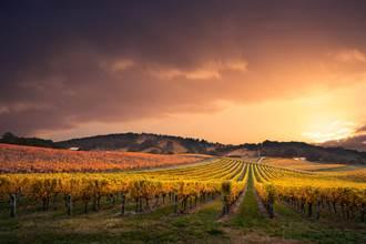 陸毀滅澳洲數十億葡萄酒產業 酒商:政府不該帶頭反華
