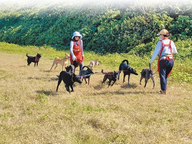 新北動保處宣布,全區動物之家即日起新增散步項目,讓1295隻毛寶貝享受自由空氣。(動保處提供/戴上容新北傳真)