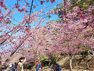 春回大地 來一趟山城茶湯╳泉湯物語