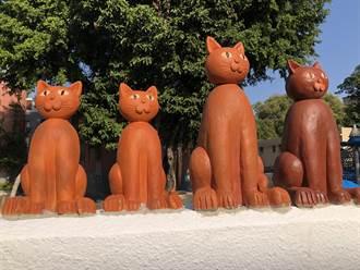 金門街頭遇見喵星人 貓牆成遊客打卡新熱點