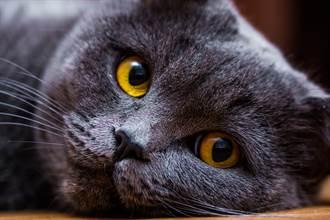 愛貓過年被獨留在家等主人4天 看監控8百萬人淚崩