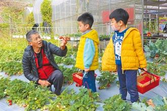 草莓园祖孙做点心 呷建康