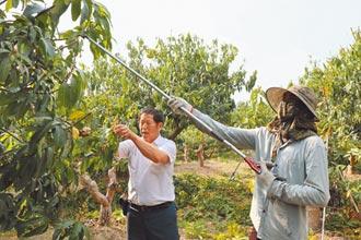 台南楠西農會引進10名農業移工