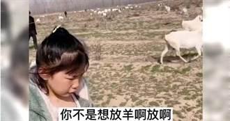 拒寫作業想放羊 陸7歲女被媽帶去牧場後崩潰:我數不完