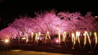 武陵農場櫻花季登場 中橫便道明開放時段要注意