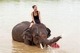 全裸趴騎瀕危大象 傳奇球星22歲辣模女兒道歉了