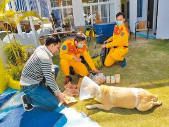 2比特犬咬傷退役搜救犬 飼主罰3萬