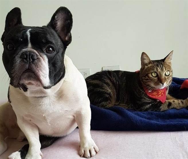 狗狗誤會主人要遺棄自己,著急到淚眼汪汪,旁邊的室友貓卻露出嘲笑表情,逗趣的畫面讓寵物溝通師印象深刻。(圖/飼主peggy提供)