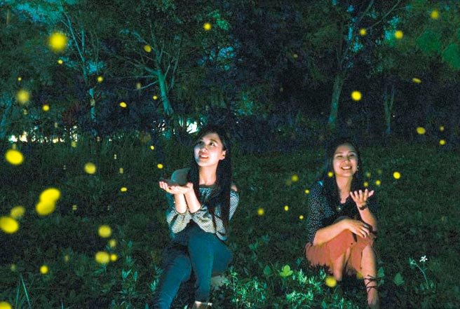 理想大地推「春季賞螢」,帶著大家尋找火金姑、夜遊螢光閃閃最美秘境。圖/業者提供
