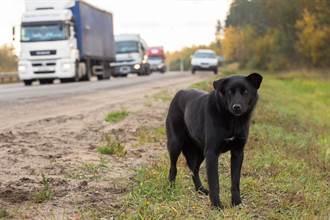大馬路驚見流浪狗危險攔車 駕駛知貼心真相被暖哭