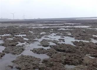 保育藻礁也雙標?民進黨昔揭台電世紀大騙局 今挨批中央聯手地方搞破壞