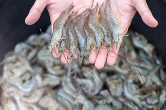 挑蝦子這3種千萬別買 營養全失連店家都不吃