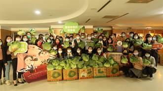 助菜農又能推廣食農教育 南市教育局認購300公斤高麗菜