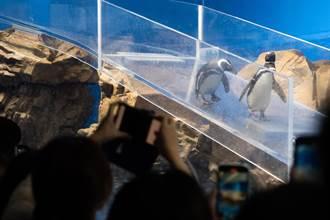 大量設計有違動物習性 動保團體點名桃園Xpark水族館