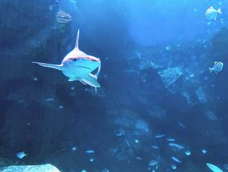 Xpark水族館頻傳動物受傷 桃市動保處:現場稽查真的沒看到