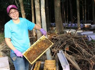 蜜蜂算是她半個父母 洪月英接手養蜂事業