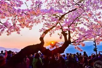 春季5大賞花好拍景點 賞花「趣」