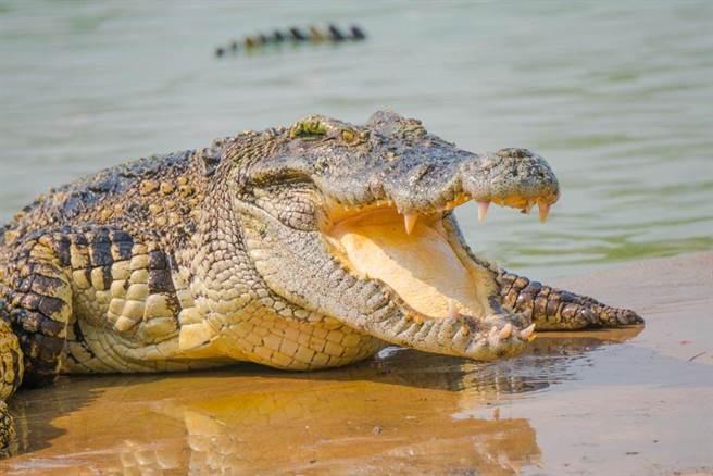 鱷魚有種神奇的能力,能夠「預知」湖水什麼時候結冰,並在結冰前將吻顎伸出水面。(示意圖/達志影像)