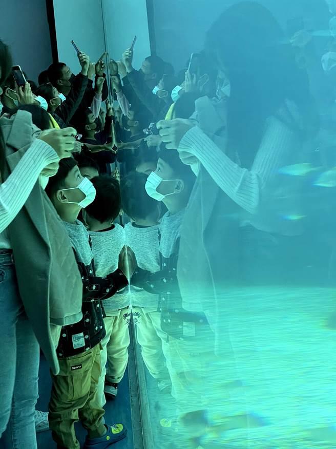 幾乎所有展示區都沒有拉開遊客的水缸的距離,孩子拍打玻璃的聲音也造成海洋生物的緊繃。(台灣動物平權促進會提供/李柏澔台北傳真)