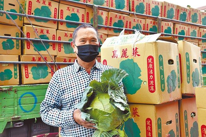 高麗菜價格低迷,雲林菜農梁燦鴻指去年年底高麗菜價格高,結果一開放高麗菜進口,市場機制就被打亂。(呂妍庭攝)