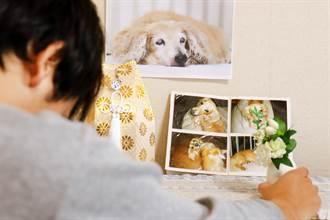 毛孩讀心術》毛孩過世急找寵物溝通 專家無奈嘆沒空:牠忙著投胎
