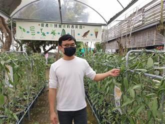 疫情下求變 台南蘭農種香莢蘭尋商機
