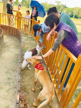 開心遛毛孩 南市4月推寵物旅遊