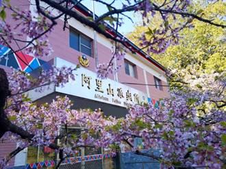 阿里山櫻花季 雄獅打造粉紅狂潮之旅