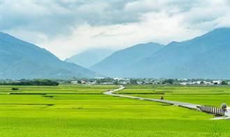 水情吃緊稻作休耕 台東米價1台斤漲1元