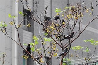 大台北賞鳥生態月將至 北市野鳥學會邀您走入雙北秘徑關心自然
